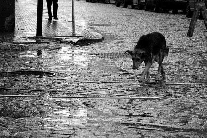Собака (2).jpg