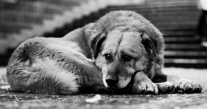 Собака (5).jpg