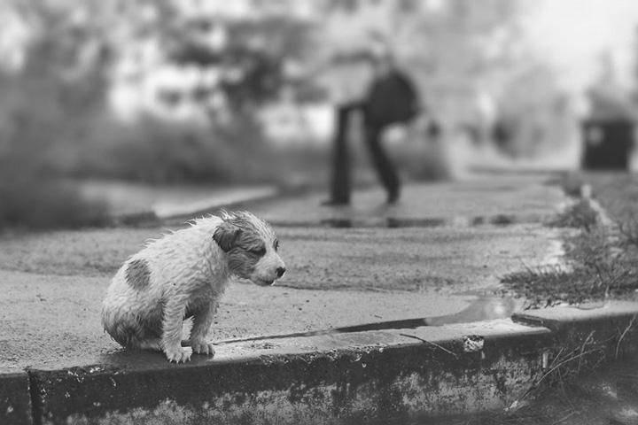 Собака (6).jpg