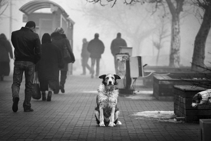 Собака (7).jpg
