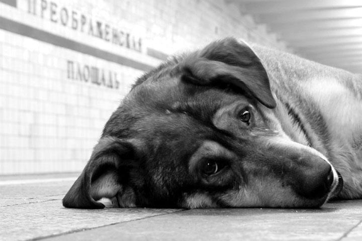 Собака (11).jpg