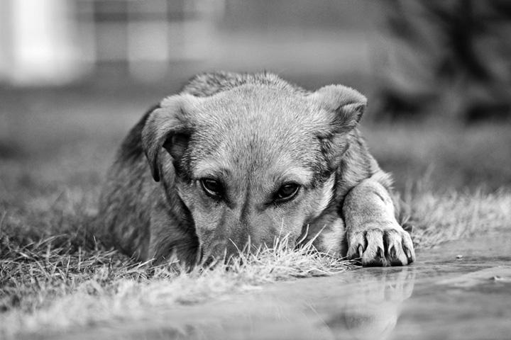 Собака (12).jpg