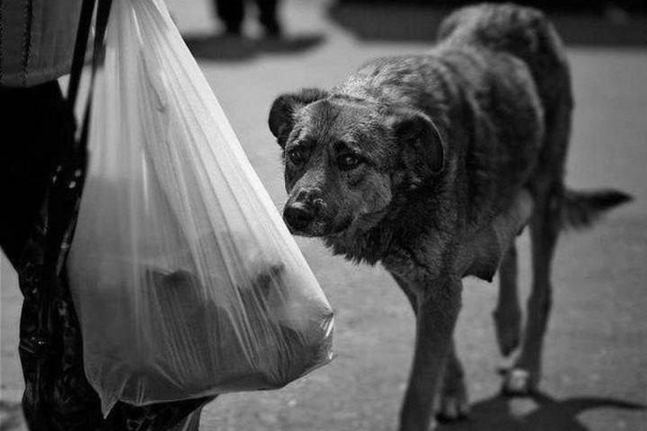 Собака (1).jpg
