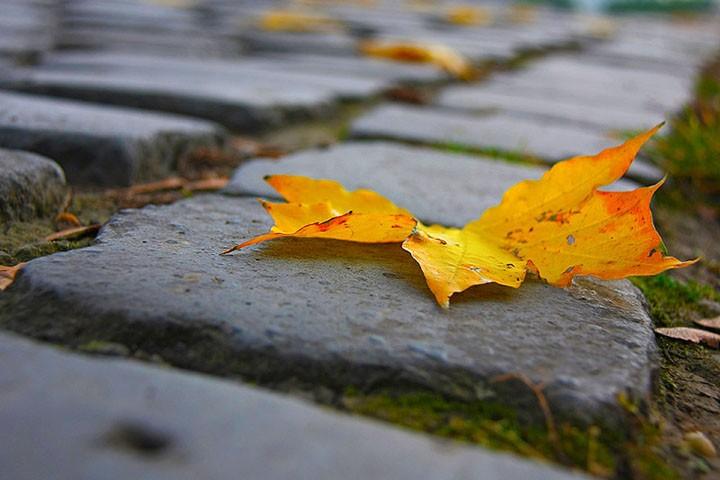 Листья (2).jpg