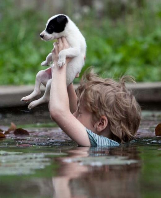 Мальчик спасает собаку.jpg