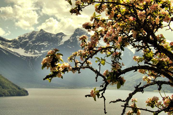 Spring i Norge.jpg