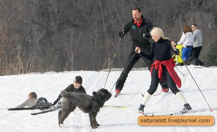 (18) Зимние виды спорта.jpg