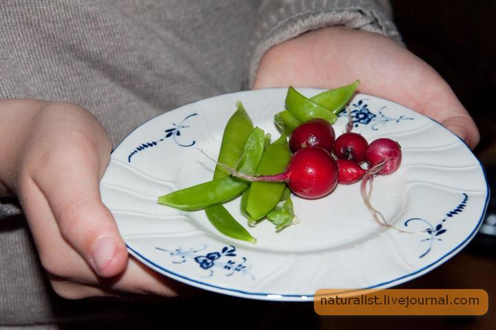 17.Mai buffet (15) Spesielle menyer for jenter.jpg