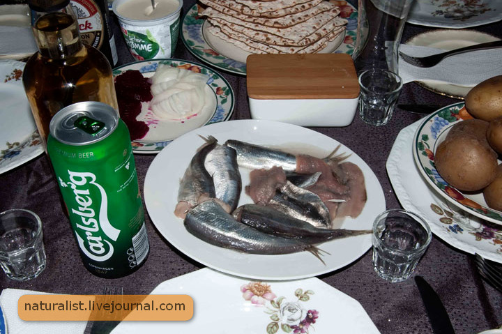 Surstromming (herring).jpg