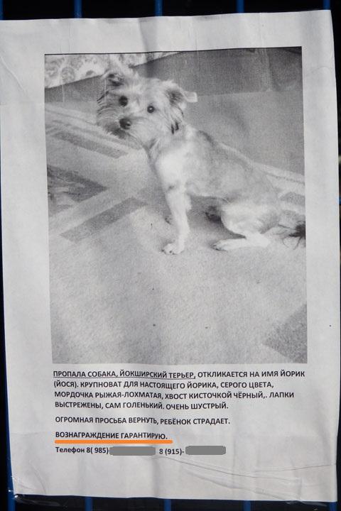 Пропала собака (2).jpg