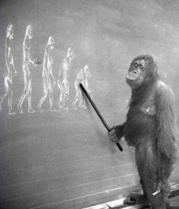 Эволюция.jpg