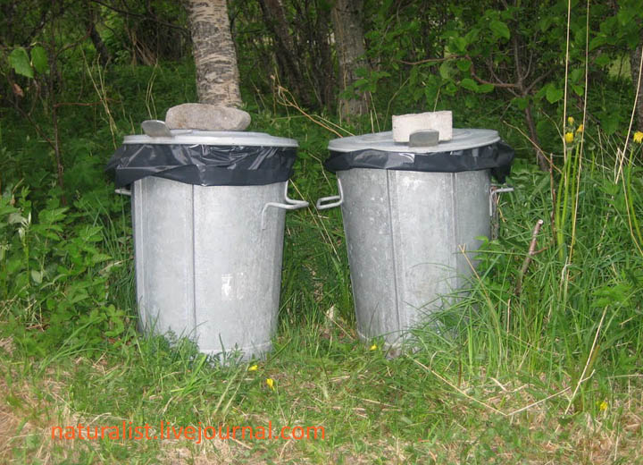 Dustbins at Geitvågen Camping.jpg