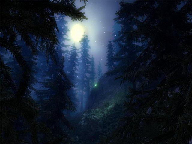 Ночь в лесу (2)