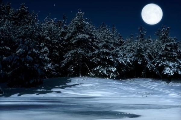 Ночь в лесу (3)