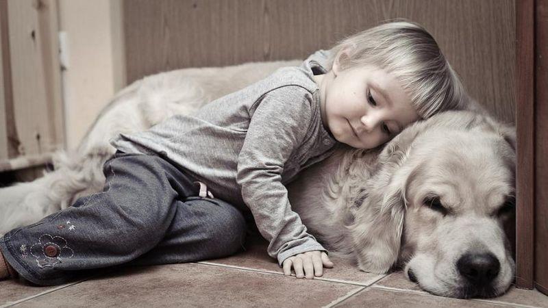 Человек и собака (30)