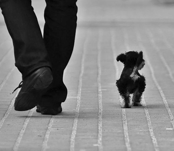 Человек и собака (21)