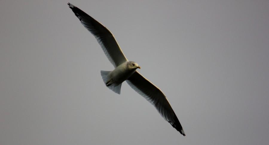 Чайка 1000х600-1