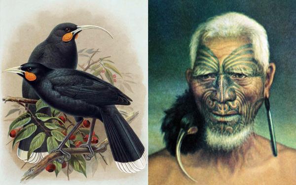 newzealand_birds_extinct-0-600