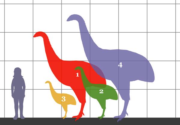 newzealand_birds_extinct-1-600