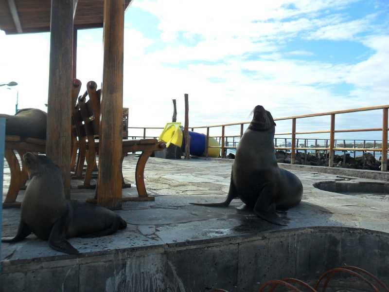 19 ИЮЛЯ, 2012  г. Остров San Cristobal (16)