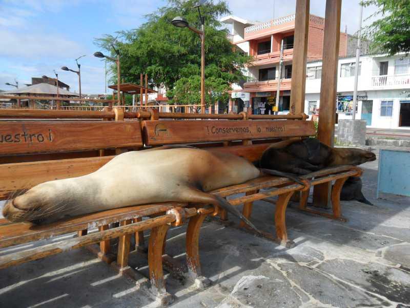 19 ИЮЛЯ, 2012  г. Остров San Cristobal (17)