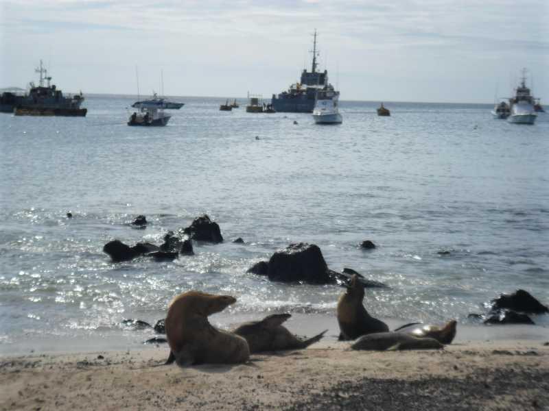 19 ИЮЛЯ, 2012  г. Остров San Cristobal (33)