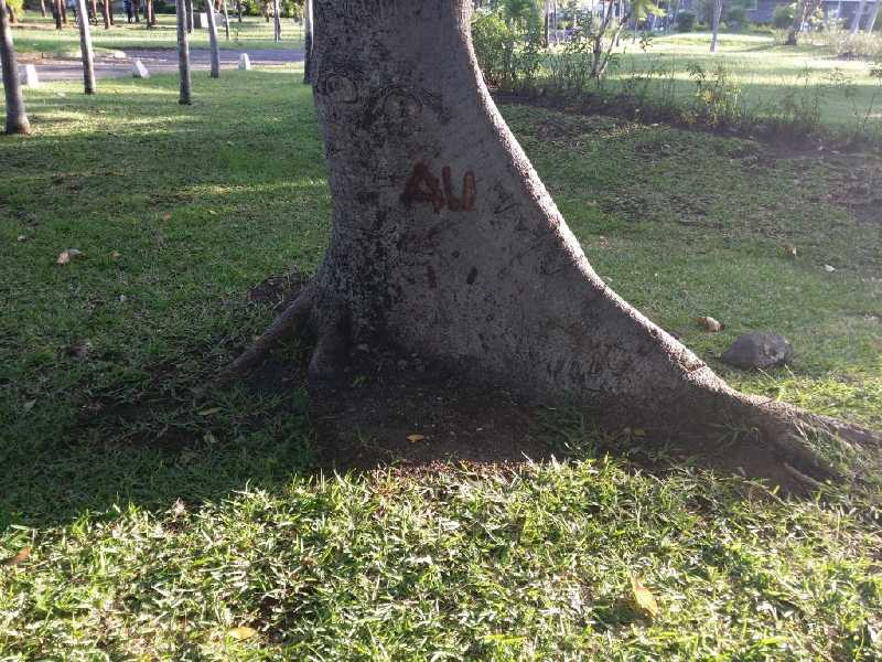 15 ЯНВАРЯ, 2014 г. Могилка Али на Маврикии, побывал  cptn и  shweda (5)