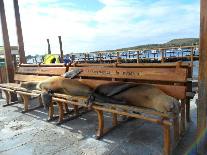 19 ИЮЛЯ, 2012  г. Остров San Cristobal (18)