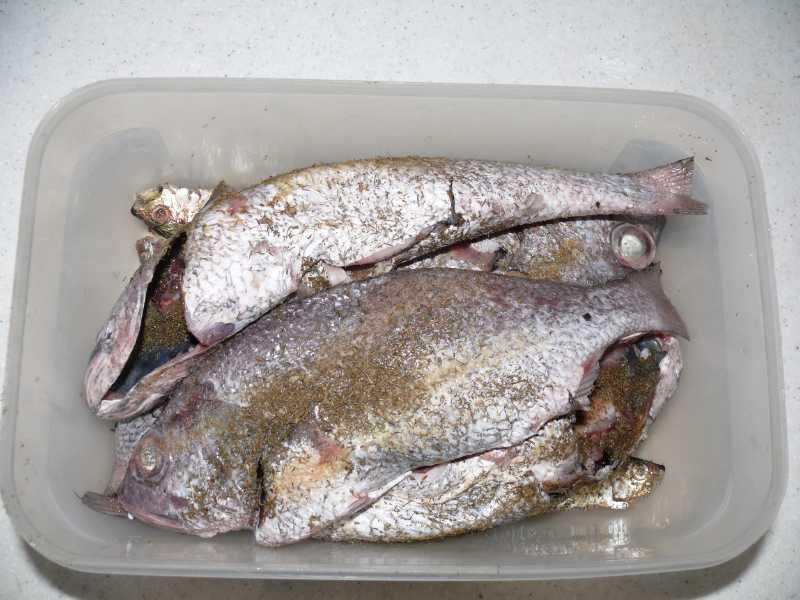 29-31 АВГУСТА, 2014 г. ресторан ZANZIBAR, марина и рыба (14)