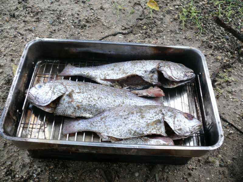 29-31 АВГУСТА, 2014 г. ресторан ZANZIBAR, марина и рыба (20)