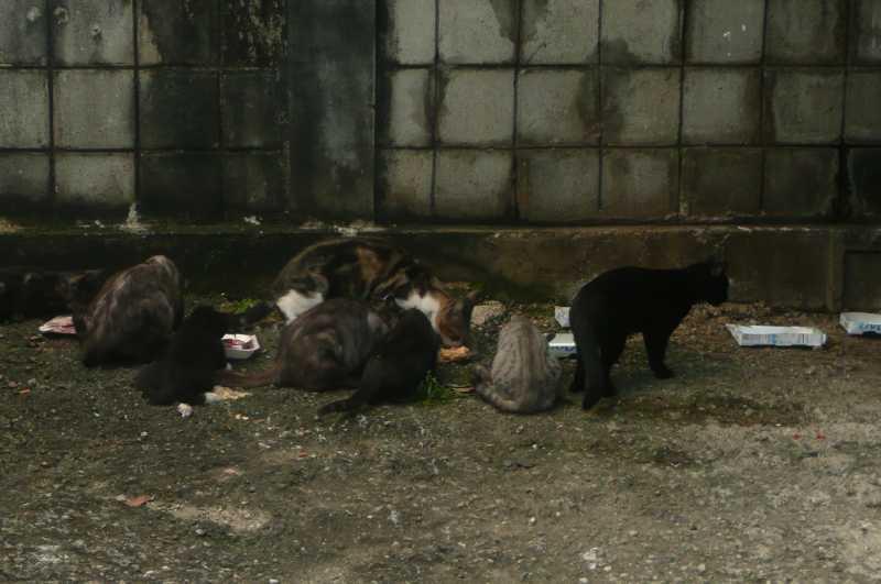 21 ЯНВАРЯ, 2015 г. БЕЗДОМНЫЕ КОТЫ (1)