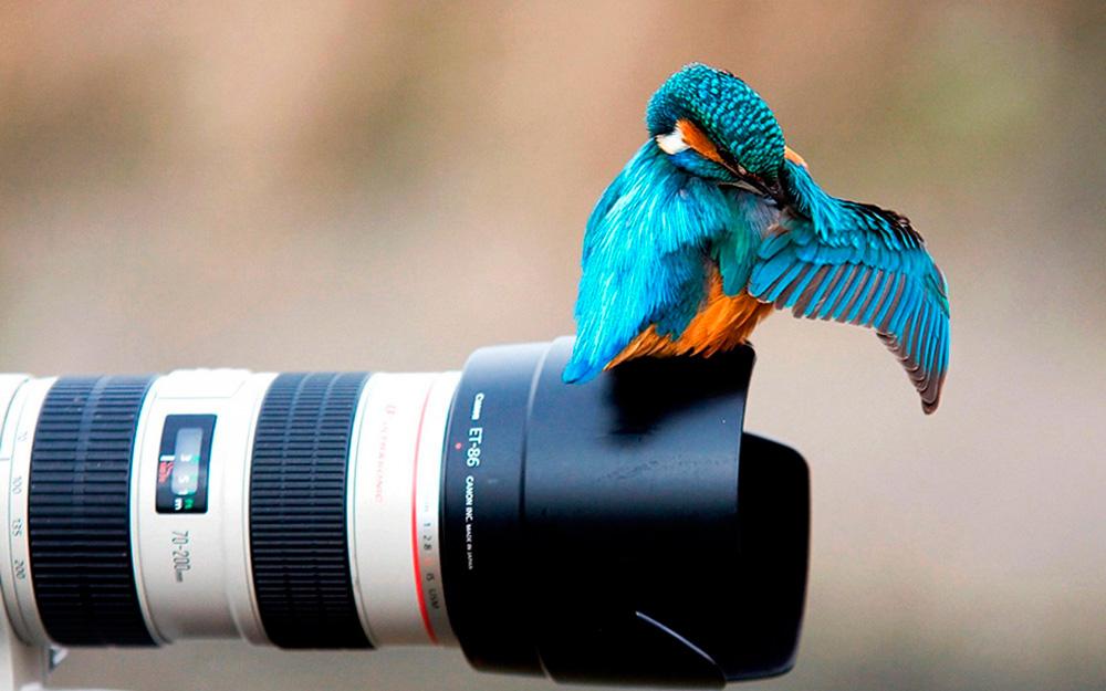 photophotoafb501ed1e24bb0968e