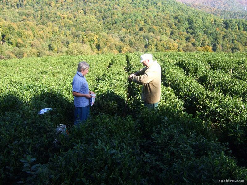 Чай в посёлке Калиновое Озеро