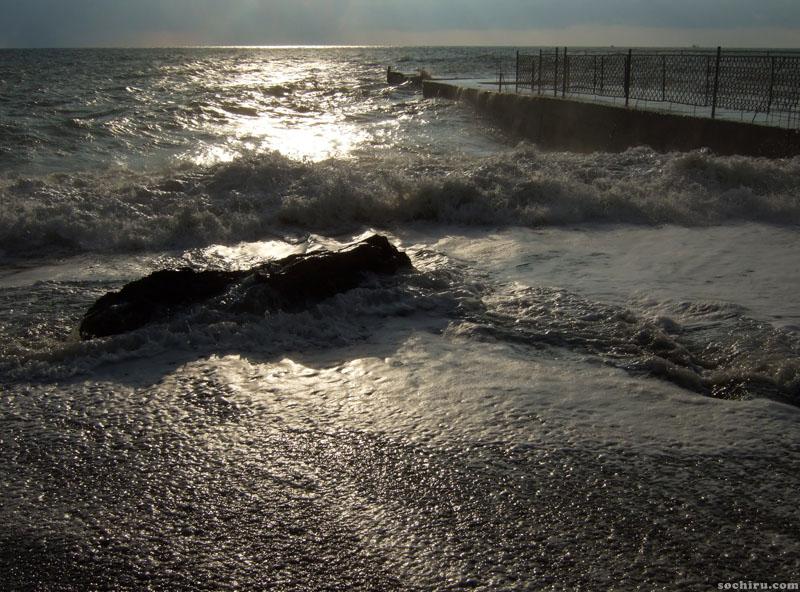 Ствол дерева, прибитый волнами к берегу