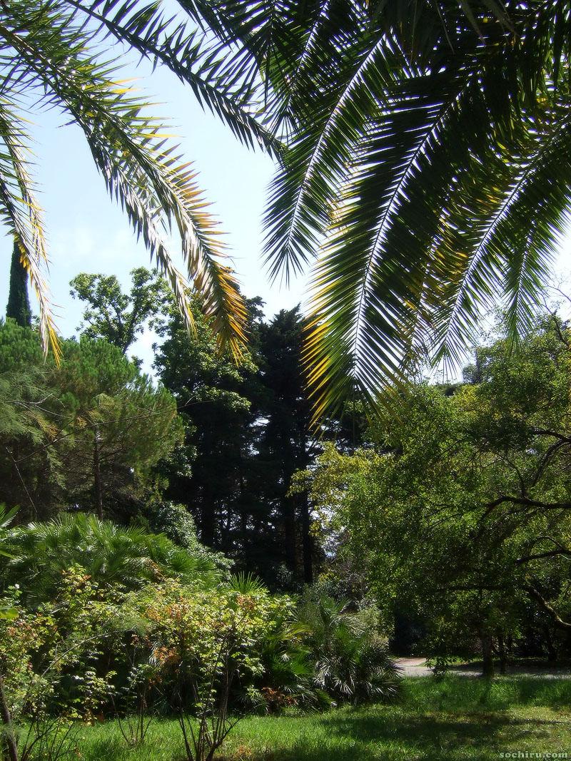 Пальмы в Дендрарии