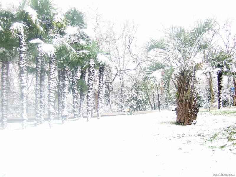 Пальмы и снег