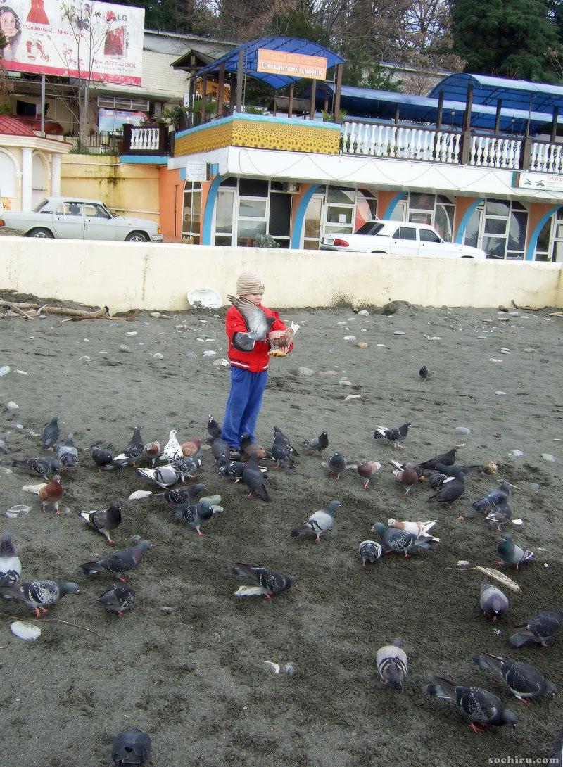 голуби на пляже Ривьеры