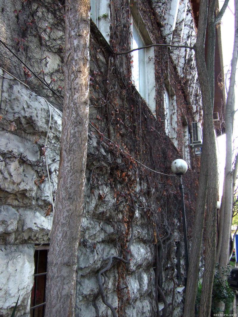 Высохшие лианы на стене здания