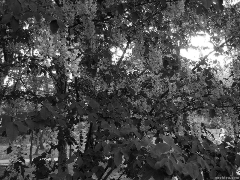 Цветы Ривьеры