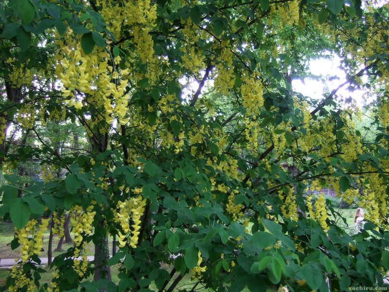 Цветы в Ривьере