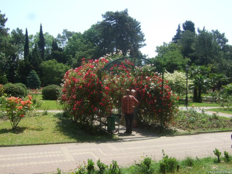 Ривьерские розы