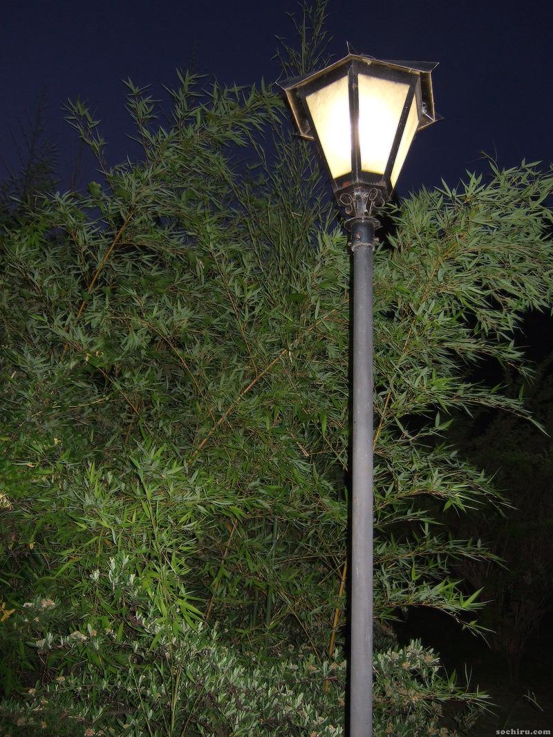 Бамбук в Сочи