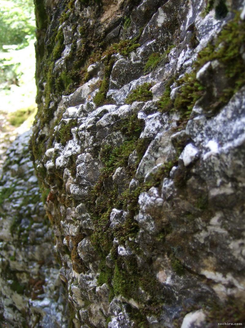Скалы, поросшие мхом