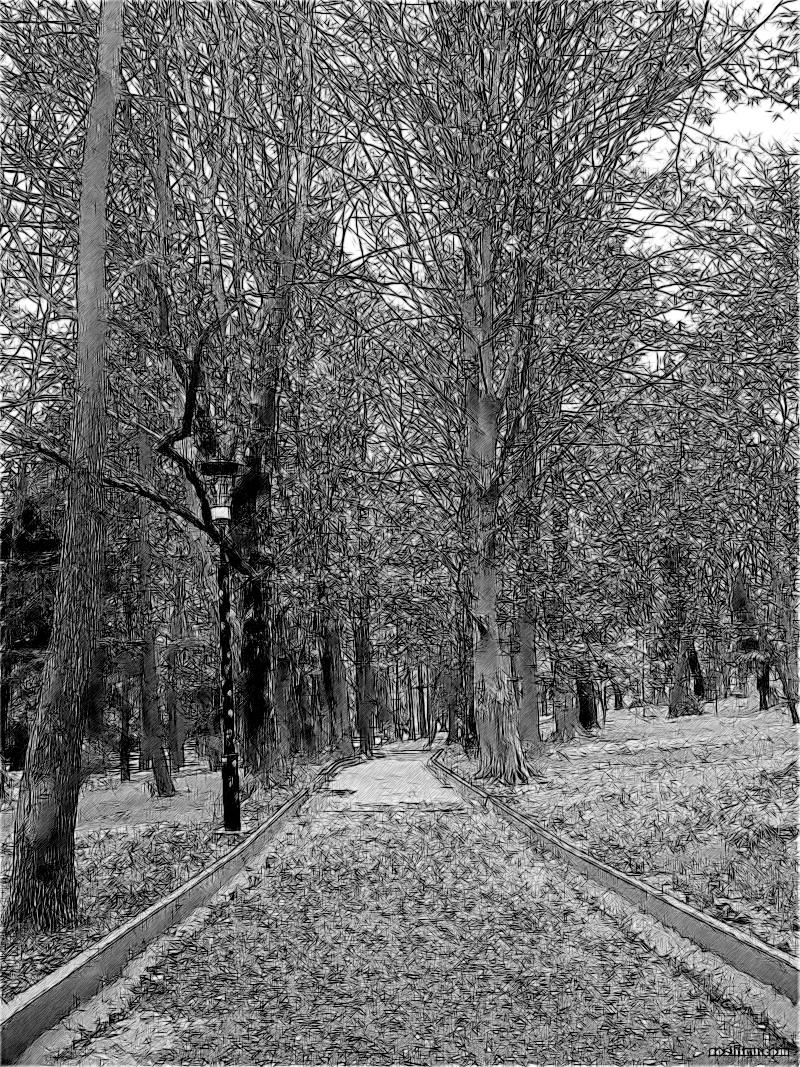 тенистая аллея парка Ривьера