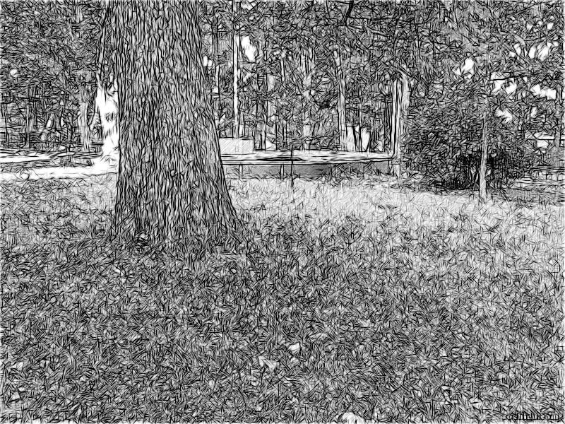 Безвременник теневой в парке Ривьера