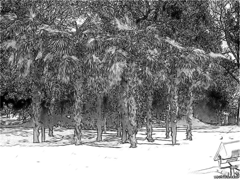 Рощица пальм под снегом
