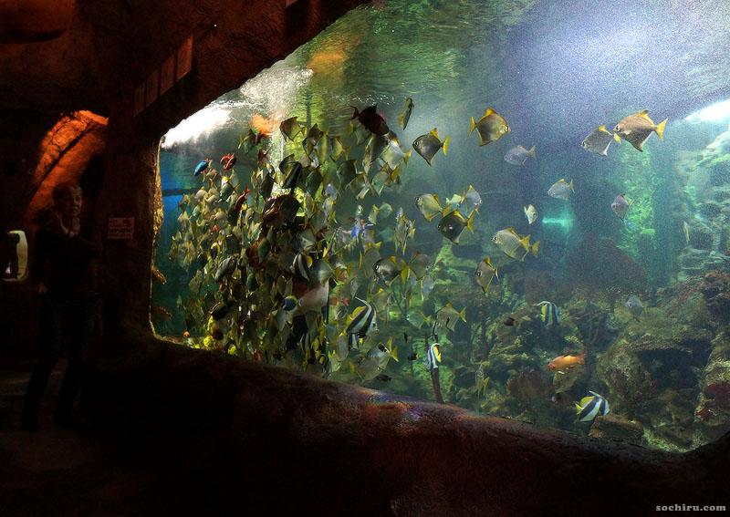 Океанариум в парке Ривьера