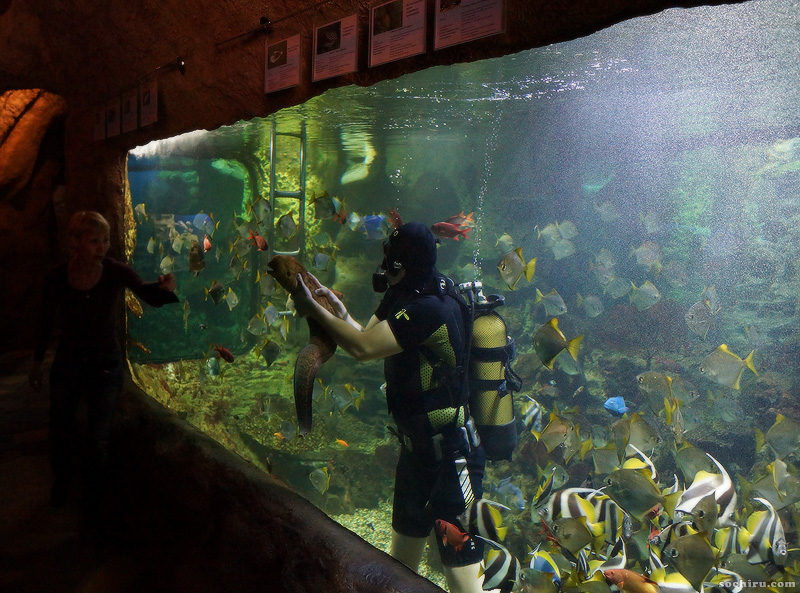 аквалангист в сочинском океанариуме