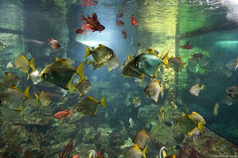 Обитатели искусственного кораллового рифа
