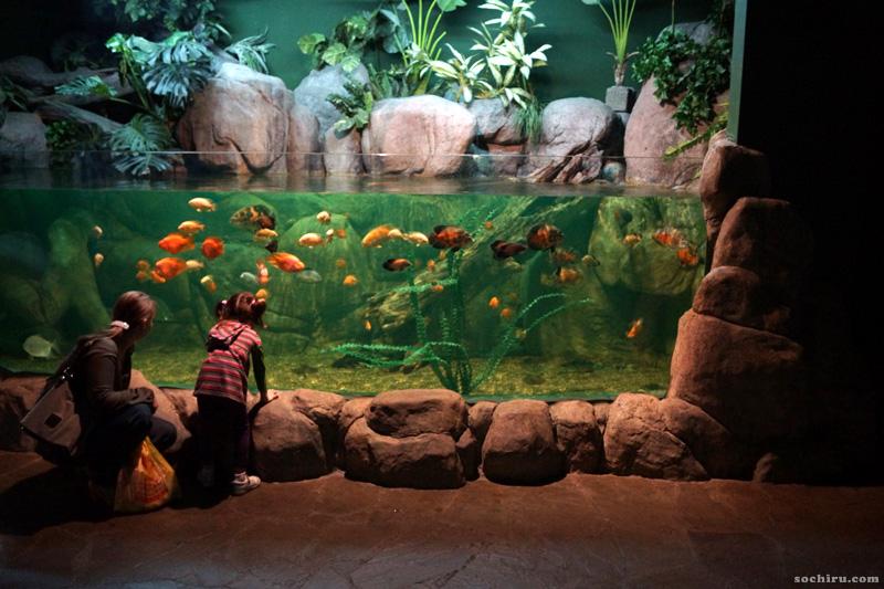 Океанариум Sochi Discovery World Aquarium